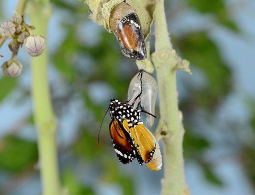 Ein unbeschreiblich befreiendes Gefühl, wie wenn sich ein Schmetterling von seinem Cocoon befreit.